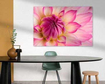 Schöne Dahlie gelb-rosa von Studio Wings