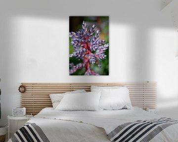 Bunte Pflanze von Ineke Wildeboer
