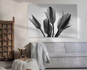 Black and white tulpen van J..M de Jong-Jansen