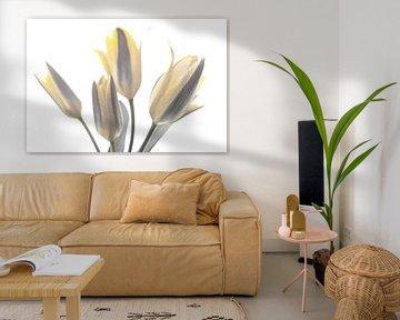 High key met gele tint tulpen van J..M de Jong-Jansen