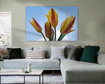 Tulpen geel en rood in het blauw van JM de Jong-Jansen