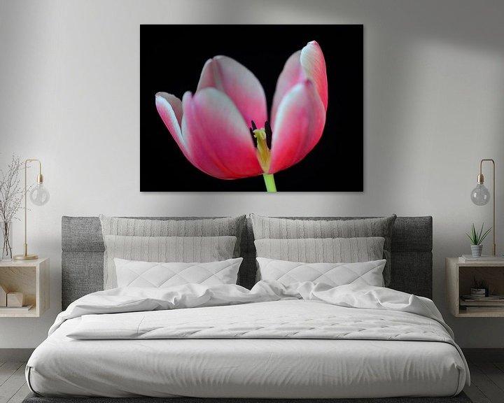 Sfeerimpressie: Tulp roze met zwarte achtergrond van Jessica Berendsen