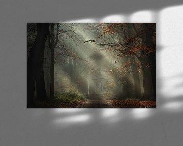 Romancer la forêt sur Roelie Steinmann