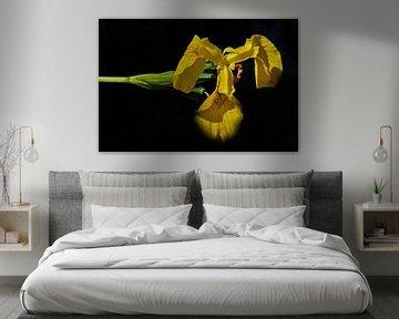 geel op zwart von Jos Burger
