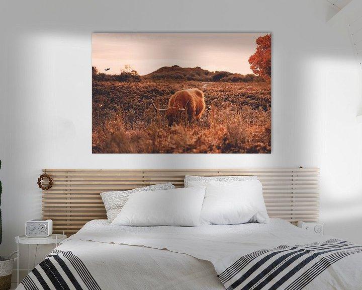 Sfeerimpressie: Schotse hooglander bij herfst - Heide - Bos - Natuur - Koe - Friesland - Drenthe - Schotland - Hoorn van Hendrik Jonkman