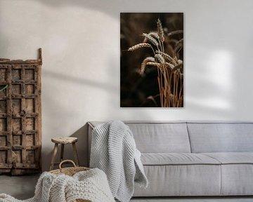 Le blé dans le dernier rayon de lumière sur Yvette Baur