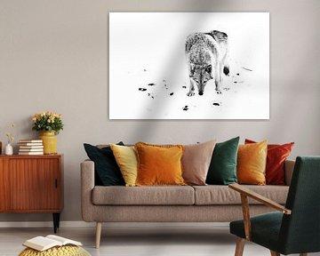 minimalistische wolf. wolf vrouwtje in de sneeuw, mooi sterk dier in de winter. zwart en wit van Michael Semenov