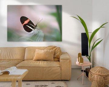Bunter Schmetterling auf grünen Blättern von Kim de Been
