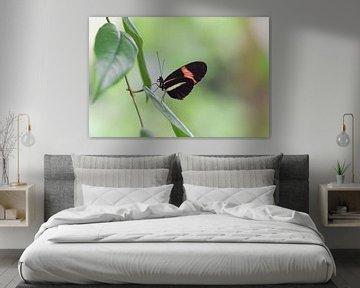 Schmetterling auf einem Blatt mit schönem, verschwommenem Hintergrund von Kim de Been