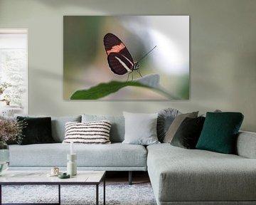 Bunter Schmetterling auf einem grünen Blatt von Kim de Been