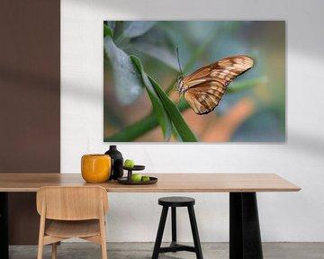 Kleurrijke bruine vlinder op een groen blad van Kim de Been