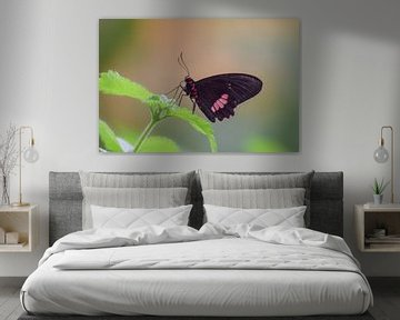 Schwarz mit rotem Schmetterling auf grünen Blättern von Kim de Been