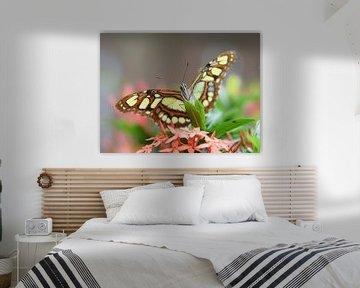 Nahaufnahme eines grün-braunen Schmetterlings von Kim de Been