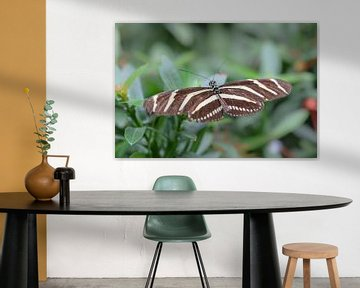 Braun mit weiß gestreiftem Schmetterling von Kim de Been