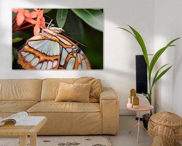 Nahaufnahme eines schönen orangefarbenen Schmetterlings mit vielen Details von Kim de Been