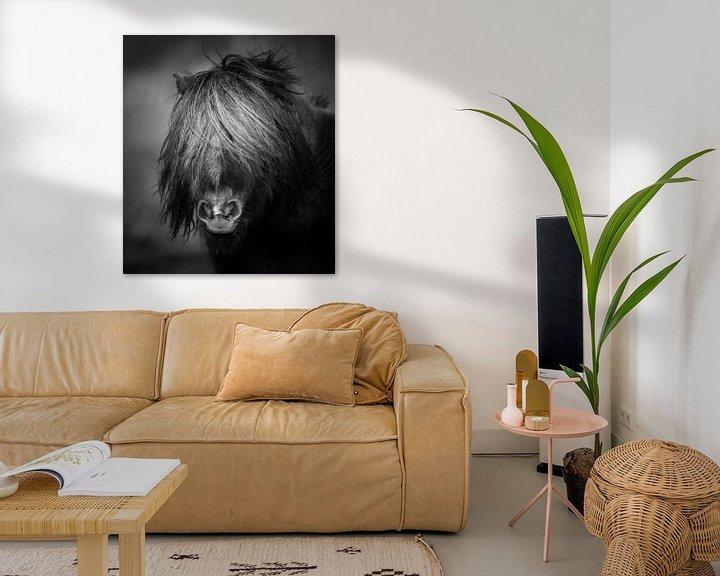 Sfeerimpressie: Pony zwart wit portret van Jeroen Mikkers