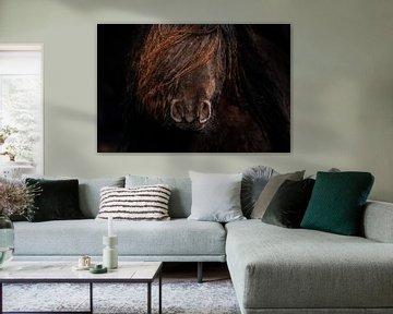 Pony close up van Jeroen Mikkers