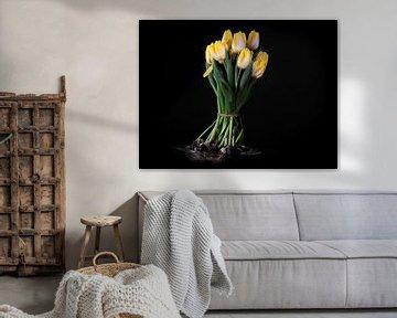 Bloeiend boeket gele tulpenbollen