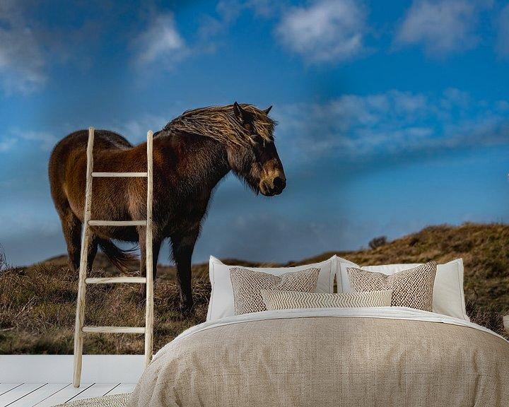 Beispiel fototapete: Exmoor Pony rund Zimmer texel von Texel360Fotografie Richard Heerschap