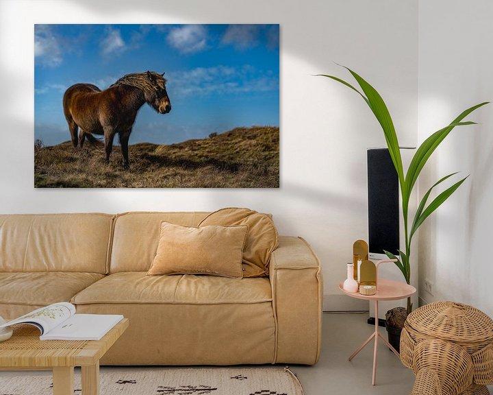 Beispiel: Exmoor Pony rund Zimmer texel von Texel360Fotografie Richard Heerschap