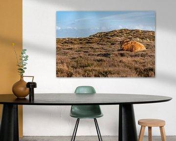 Hooglander bollenkamer Texel van Texel360Fotografie Richard Heerschap