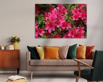 hellrosa Blumen von Mila van Pijkeren
