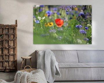 1 rote Blume in der Mitte eines Feldes mit violetten Blumen von Mila van Pijkeren