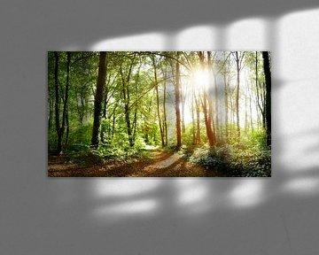 Un chemin forestier à la lumière du soleil sur Günter Albers
