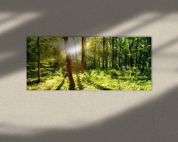 open plek in het bos van Günter Albers