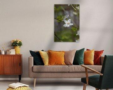 Frühlingsblüte (2) von Rossum-Fotografie