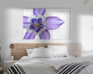 violette Blume von gj heinhuis