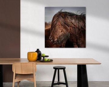 Pony Nahaufnahme von Jeroen Mikkers