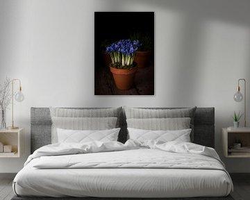 Blaue Schwertlilien von Josette Alkema