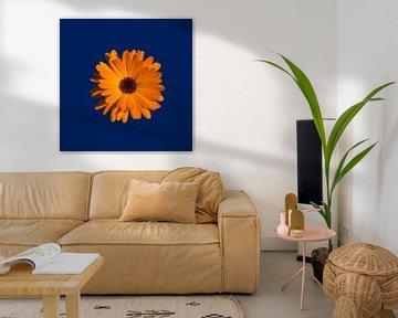 Orange Power Flower van > VrijFormaat <