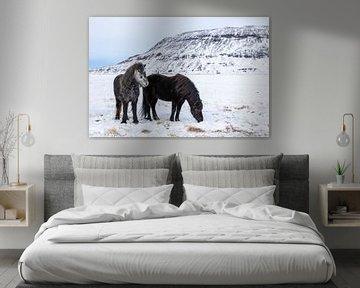 Islandpferd von Tilo Grellmann | Photography
