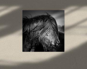 Pony schwarz-weiß von Jeroen Mikkers