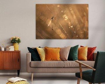 libelle in gouden licht van gj heinhuis