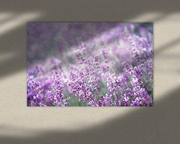 Lavendel von Bright Designs