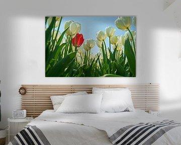 Blumenzwiebelfeld mit weißen Tulpen und nur einer roten dazwischen. von Gert van Santen
