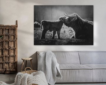 Zwart wit  Pasgeboren schotse hooglander kalf knuffelt met moeder koe van Maarten Oerlemans
