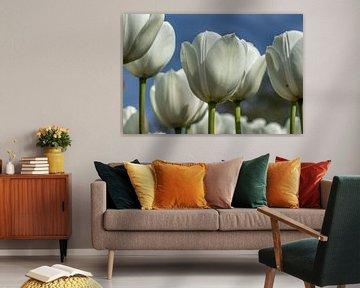 Weiße Tulpen aus nächster Nähe von Bianca Boogerd