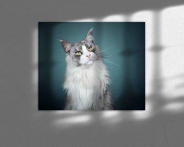 Maine Coon-Katze von Lotte van Alderen