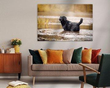 Labrador retriever hond in het water van Lotte van Alderen