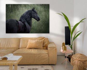 Le cheval frison en hiver sur Lotte van Alderen