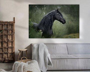 Un cheval frison dans le vert de l'hiver sur Lotte van Alderen