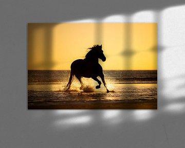 silhouette van een paard op het strand van Lotte van Alderen