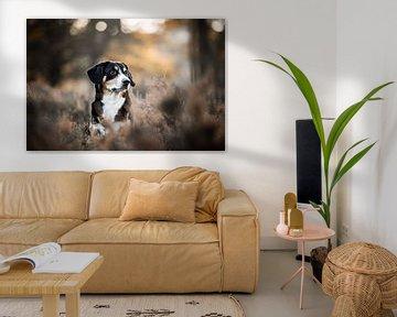 Entelbucher sennenhond in de heide van Lotte van Alderen