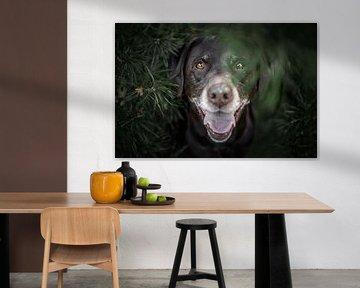 labrador retriever hond verstopt tussen de dennen van Lotte van Alderen