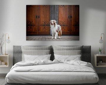 Portrait d'un chien de berger australien sur Lotte van Alderen
