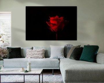 rode roos op zwarte achtergrond van Annet Niewold
